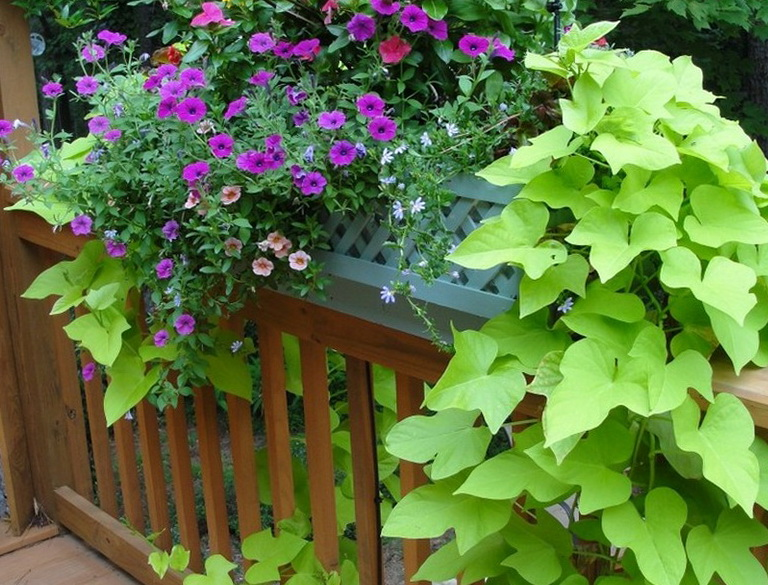 Deck Railing Planters Lowes Home Design Ideas