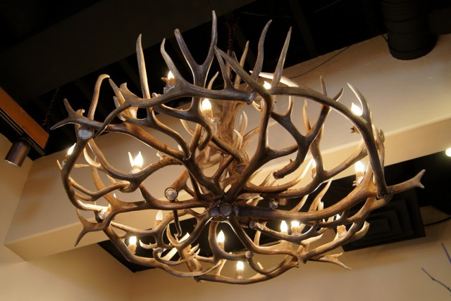 Deer Antler Chandelier Nz