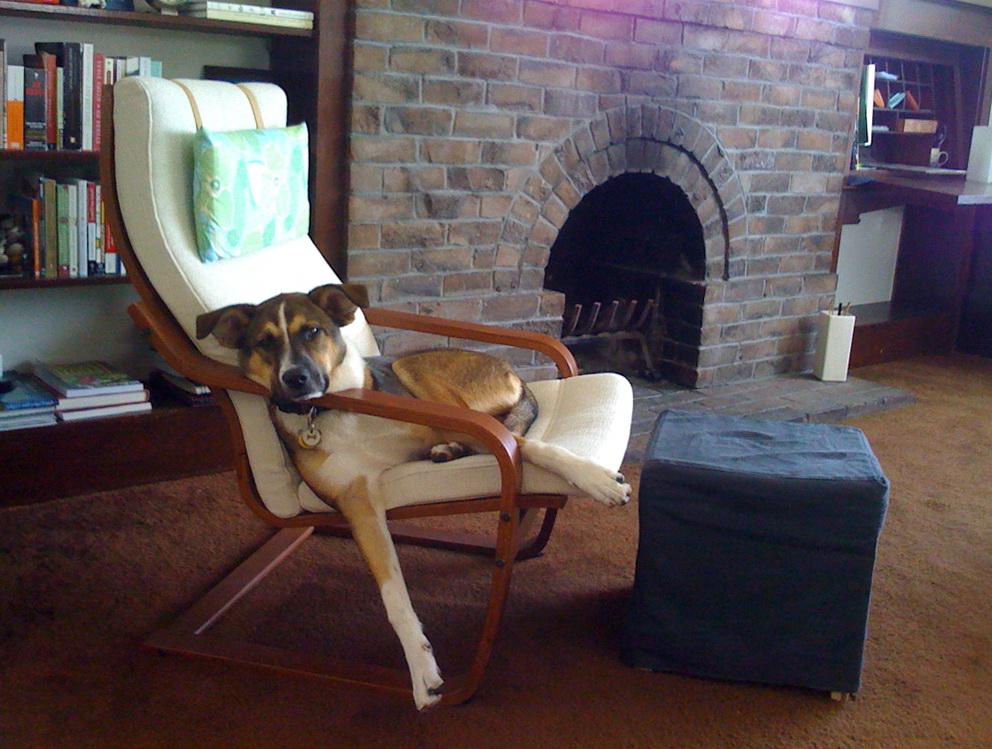 Ikea Poang Chair Cushion Leather | Home Design Ideas