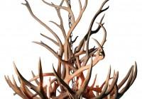 Deer Antler Chandelier Home Depot